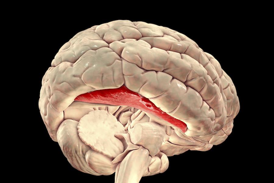 Beyindeki fusiform yüz alanı