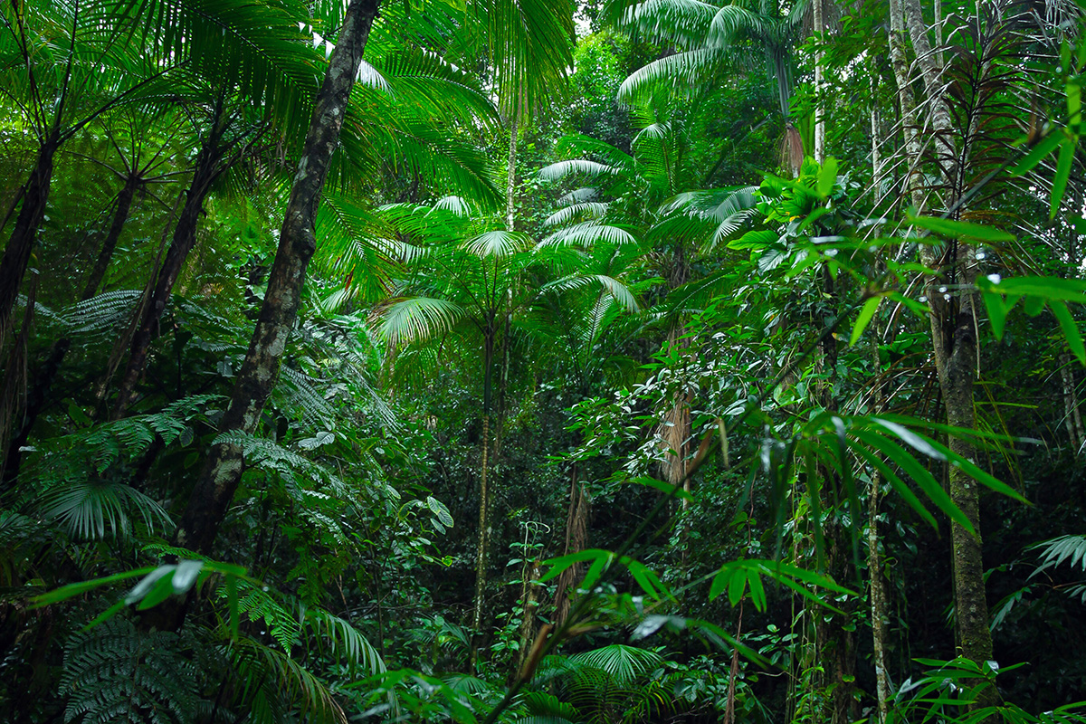 Belirli bir bölgede ya da zaman diliminde yaşayan bitki türleri flora, hayvan türleri ise fauna olarak isimlendirilir..
