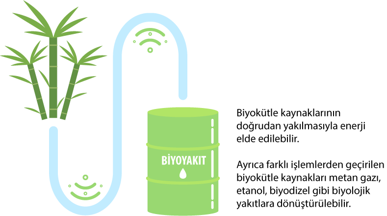 data-cke-saved-src=https://bilimgenc.tubitak.gov.tr/sites/default/files/biyoyakit.png