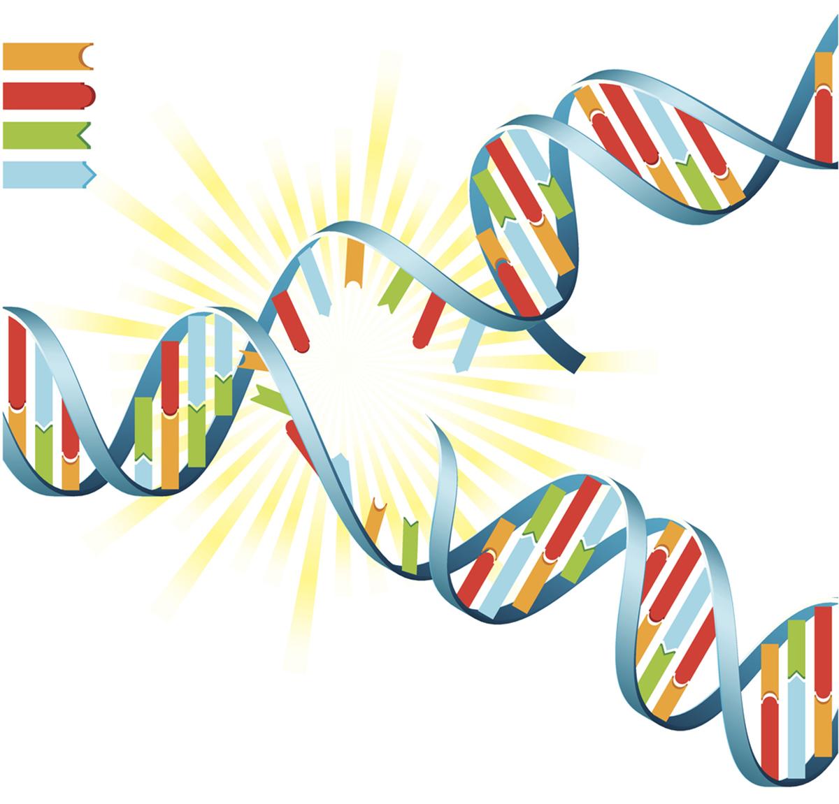 DNA'nın ikili sarmal yapısının ayrılması