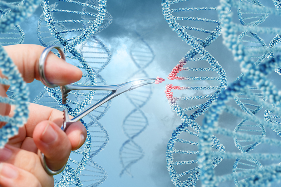 DNA molekülünün yapısı çift zincir