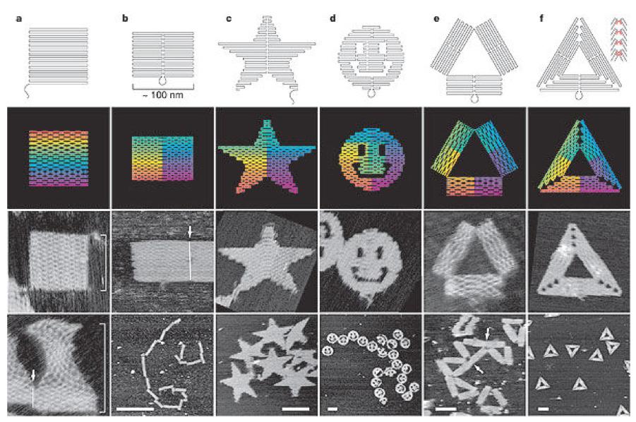 data-cke-saved-src=http://www.bilimgenc.tubitak.gov.tr/sites/default/files/dna_origami_gulen_yuz.png