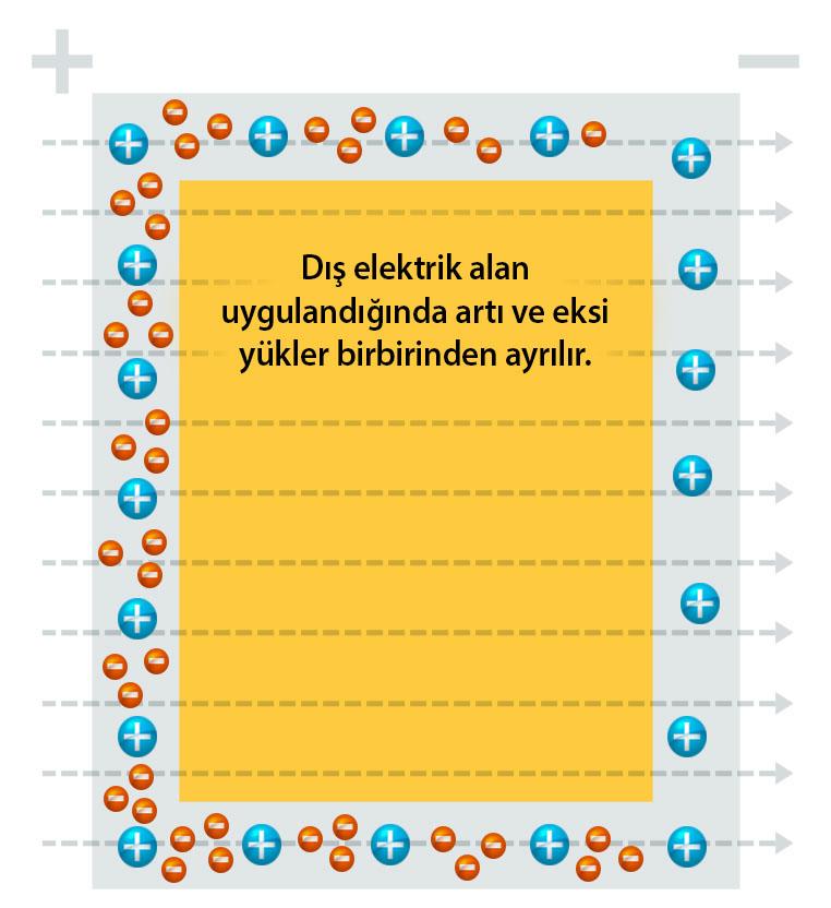 data-cke-saved-src=https://bilimgenc.tubitak.gov.tr/sites/default/files/faraday-kafesi-2.jpg