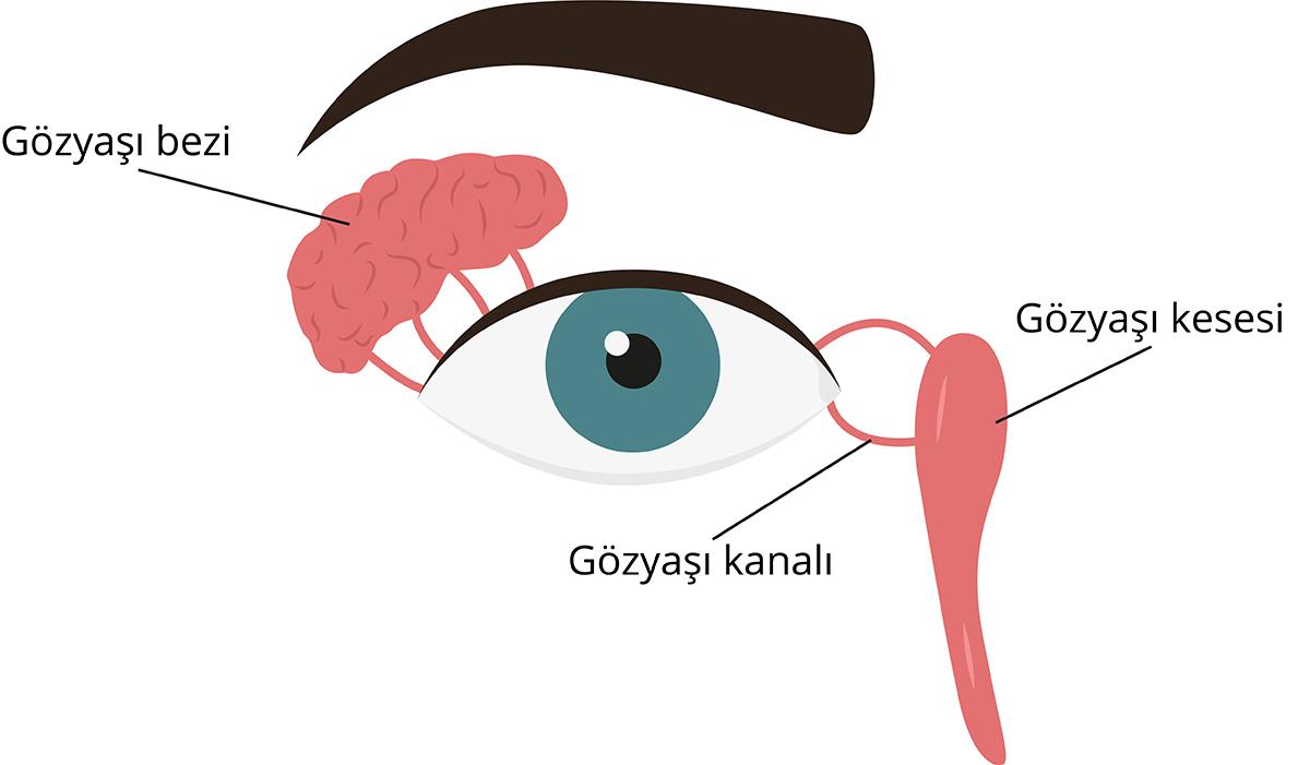 Gözyaşı sistemi