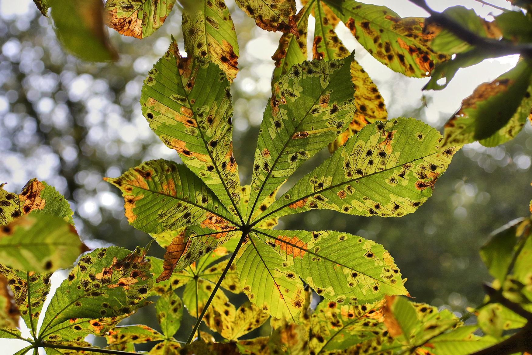 Ozon molekülleri bitkilerde hücre ölümüne sebep olur. Bitkilerin yapraklarındaki kahverengi lekelerin sebebi budur.