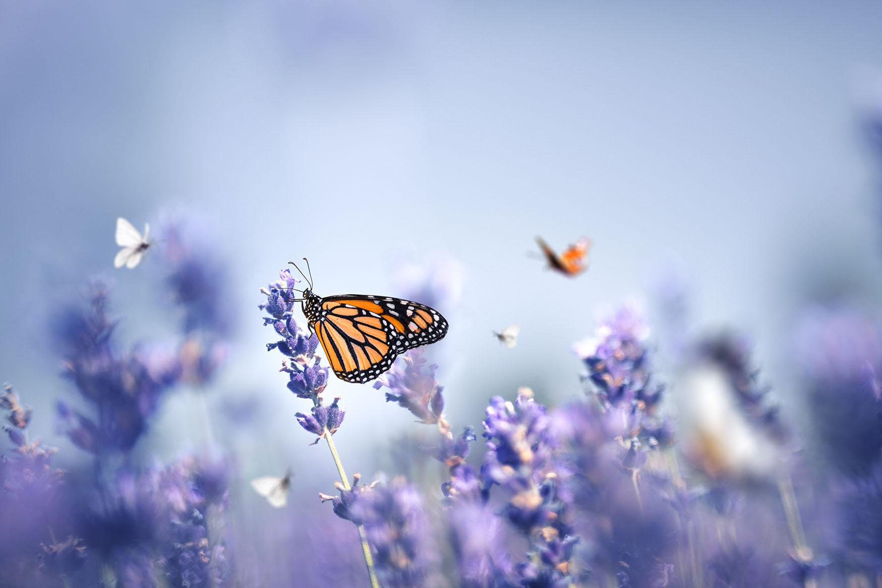 ilkbaharın renkleri fotoğraf yarışması tübitak