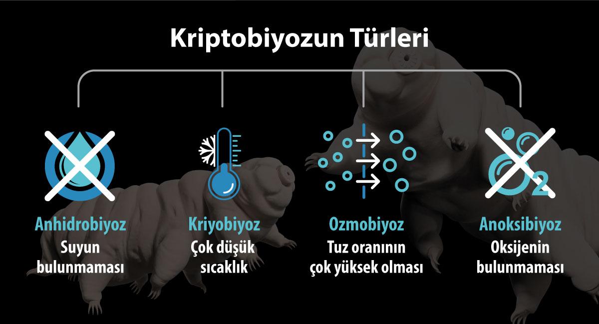 kriptobiyoz nedir özellikleri ve türleri nelerdir