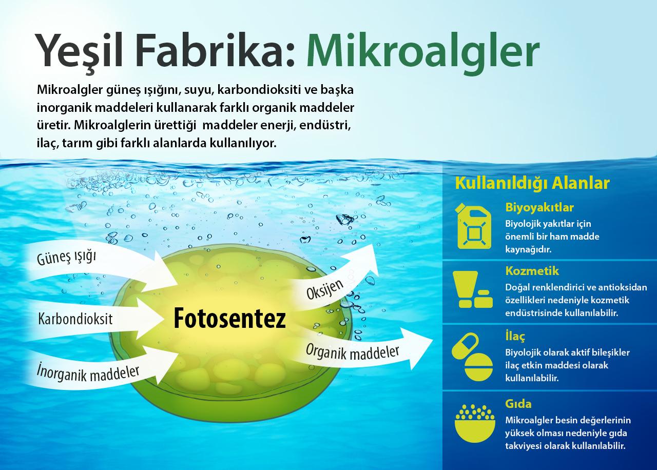 data-cke-saved-src=http://www.bilimgenc.tubitak.gov.tr/sites/default/files/mikroalgler.jpg
