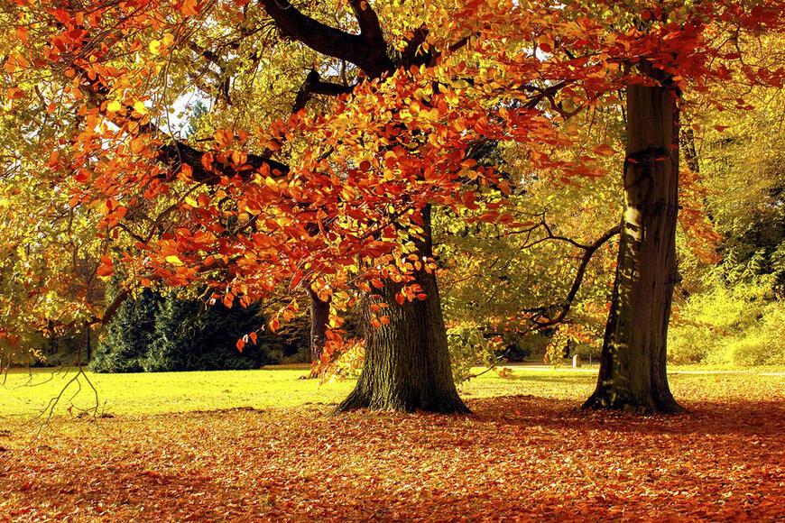Sonbaharda Yapraklar Neden Renk Degistirir Yapraklar Neden