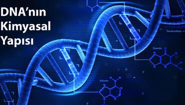 DNA nedir, dna molekülünün kimyasal yapısı
